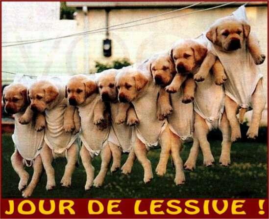 http://www.dudelire.com/images/gal/0u8433i-animaux-001.jpg