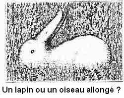 Images insolites....... 60ru3l5-lapin_ou_oiseau