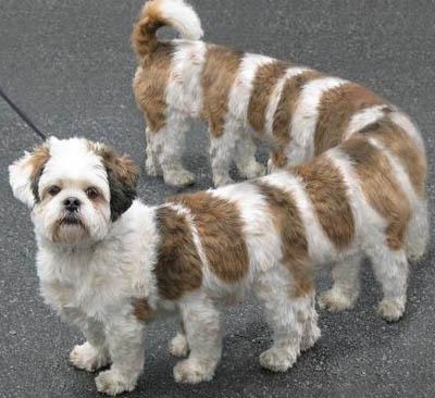 chien absurde mille-pattes