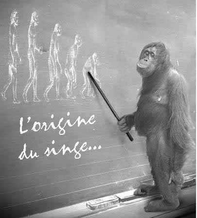 bon à savoir ! 93d1d92-origine-du-singe