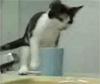 Voir la vidéo Quand les chats s'y mettent